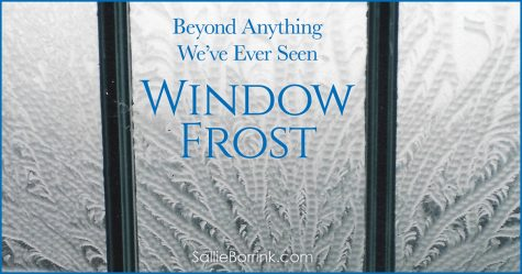 Beyond Anything We've Ever Seen - Window Frost 2