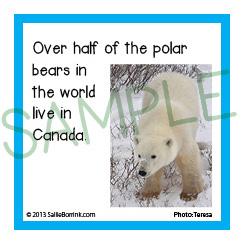 Polar Bears Facts Kids