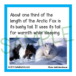 Arctic Facts Kids
