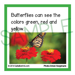 Facts about Butterflies for Kids