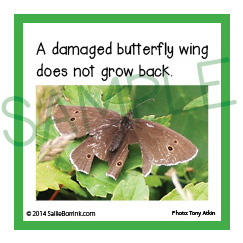 Butterfly Fun Facts Kids