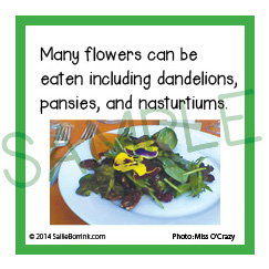Edible Flowers Fun Facts