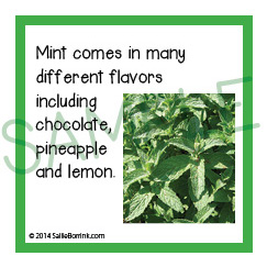 Flavors of Mint Fun Facts