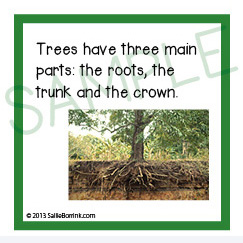 Tree facts kids