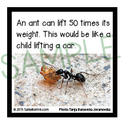 Fun Facts About Ants Carrying Things