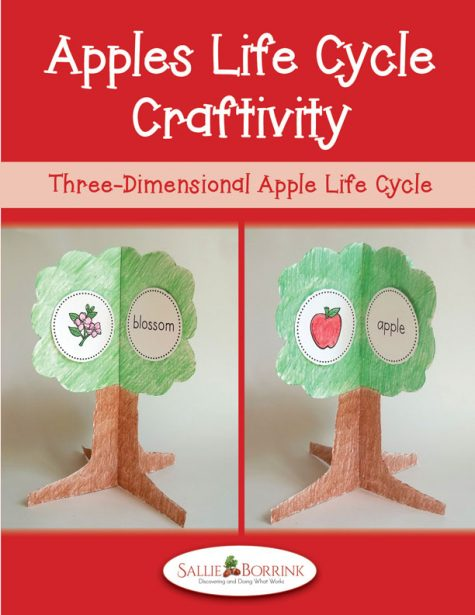 Apples Life Cycle Craftivity