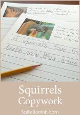 Free Squirrels Copywork
