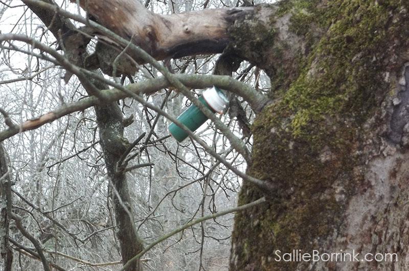 geocaching capsule in apple tree