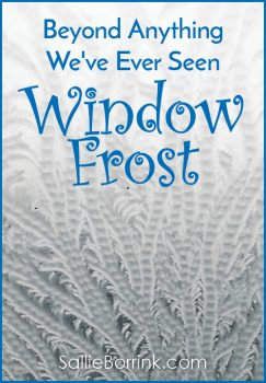 Beyond Anything We've Ever Seen – Window Frost