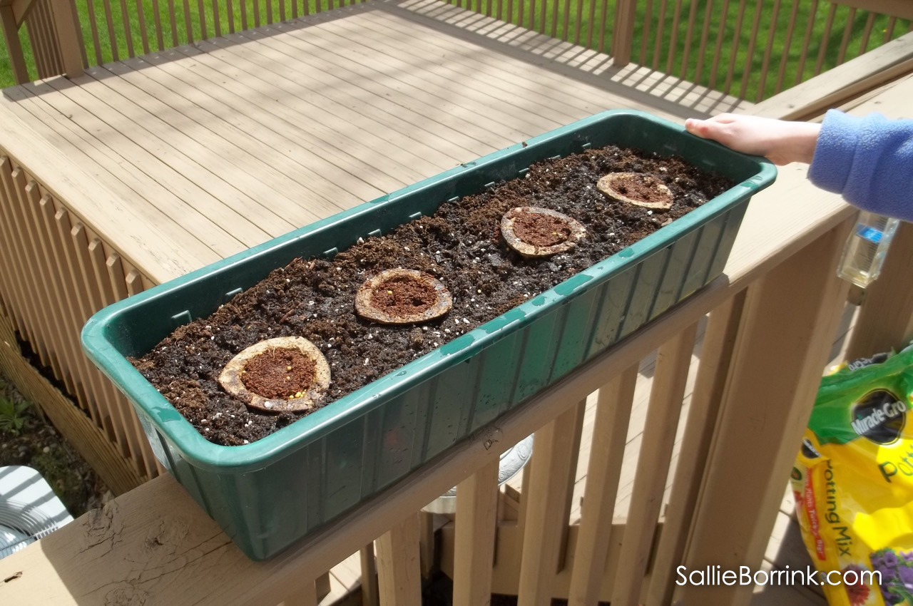Grow-ables planted in a planter ready to grow