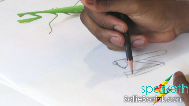 Praying Mantis Drawing