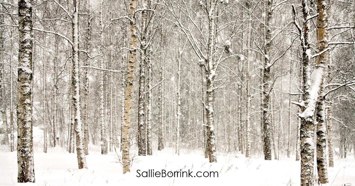 Snowy Wintry Forest for Cozy Living in America