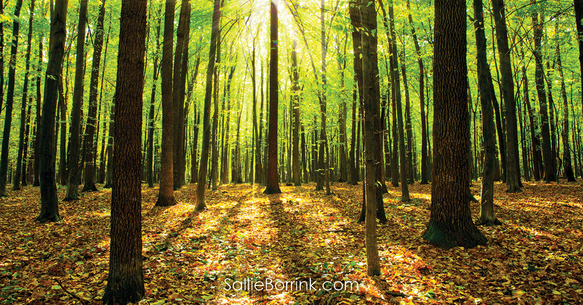 Autumn Forest - Encouraging a Homeschool Mom