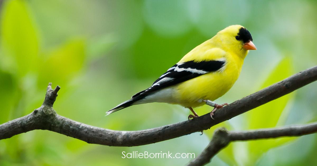 Goldfinch - Encouraging a Homeschool Mom