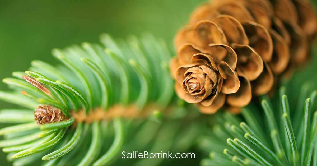 Pine Cone and Branches - Encouraging a Homeschool Mom