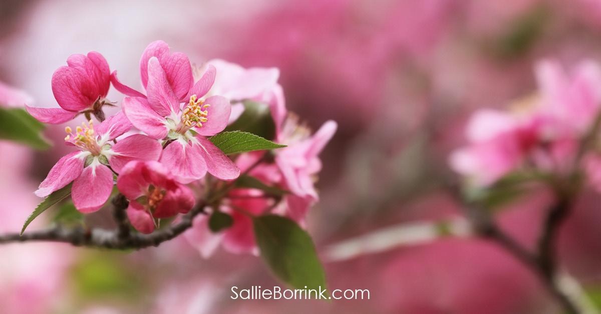 Pretty Spring Blossoms - Encouraging a Homeschool Mom