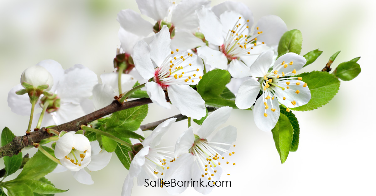 White Spring Flowers - Encouraging a Homsechool Mom