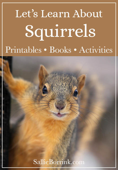 Let's Learn About Squirrels