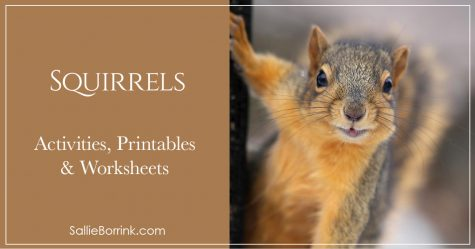 Squirrels Activities Printables and Worksheets 2