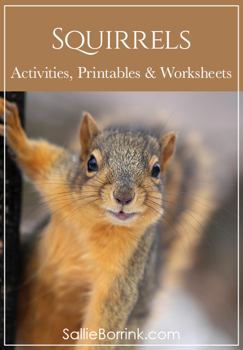 Squirrels Unit Study Activities