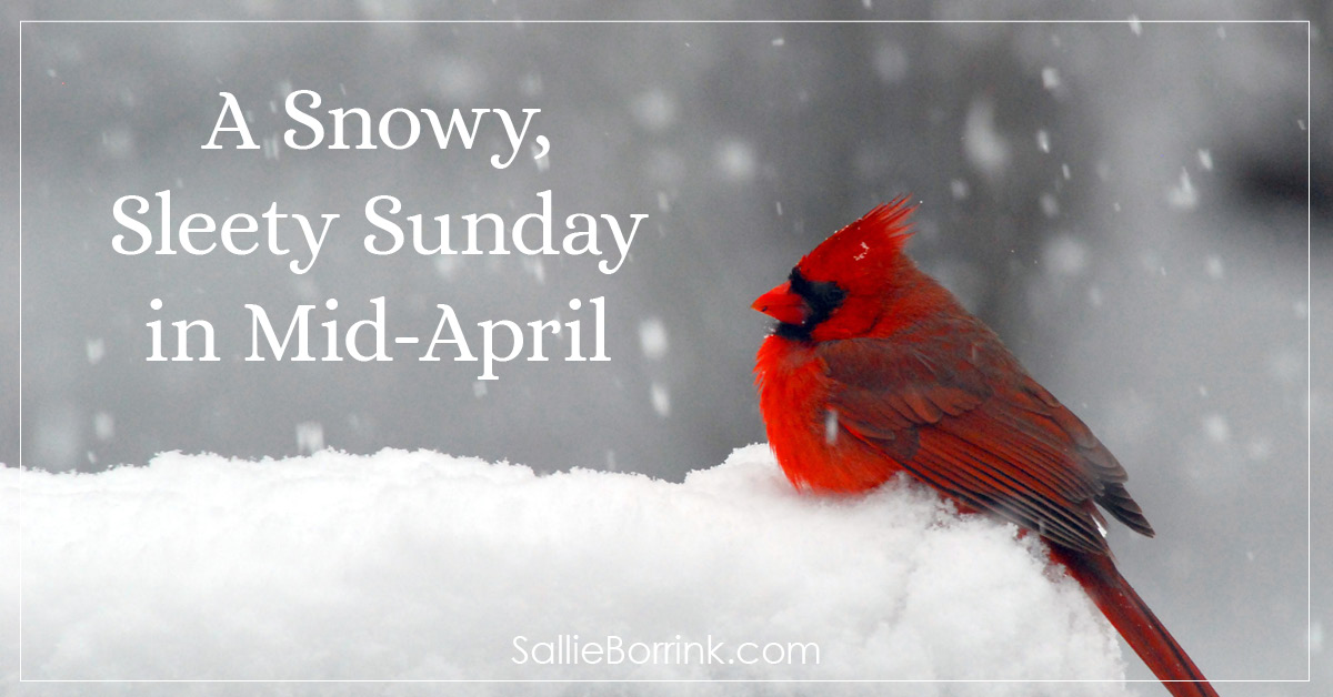A Snowy, Sleety Sunday in Mid-April 2