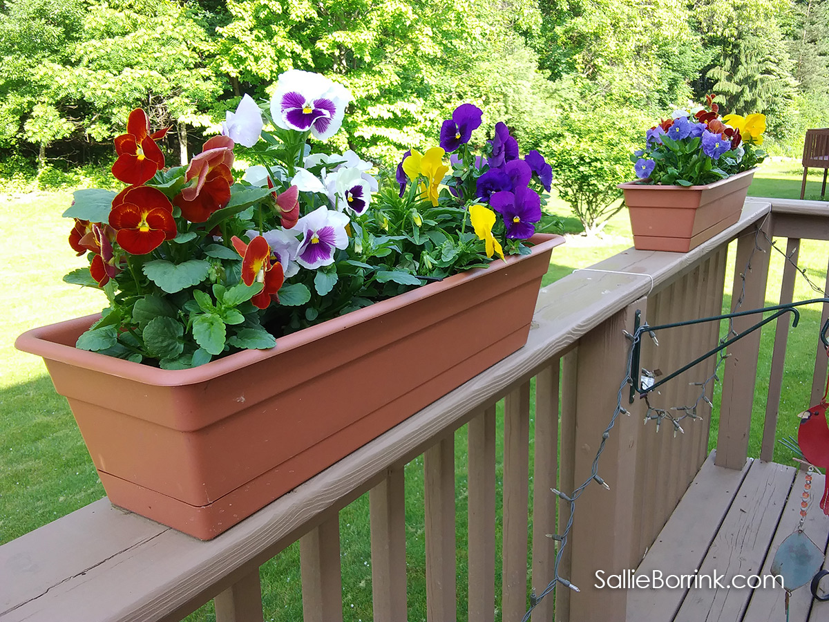 Colorful planters full of pansies