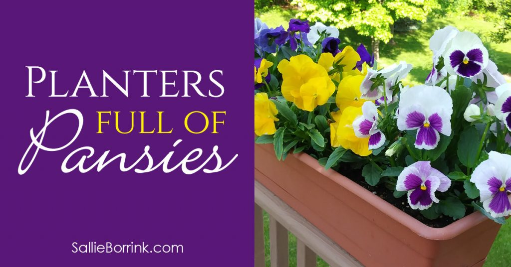 How to Grow Planters Full of Pansies