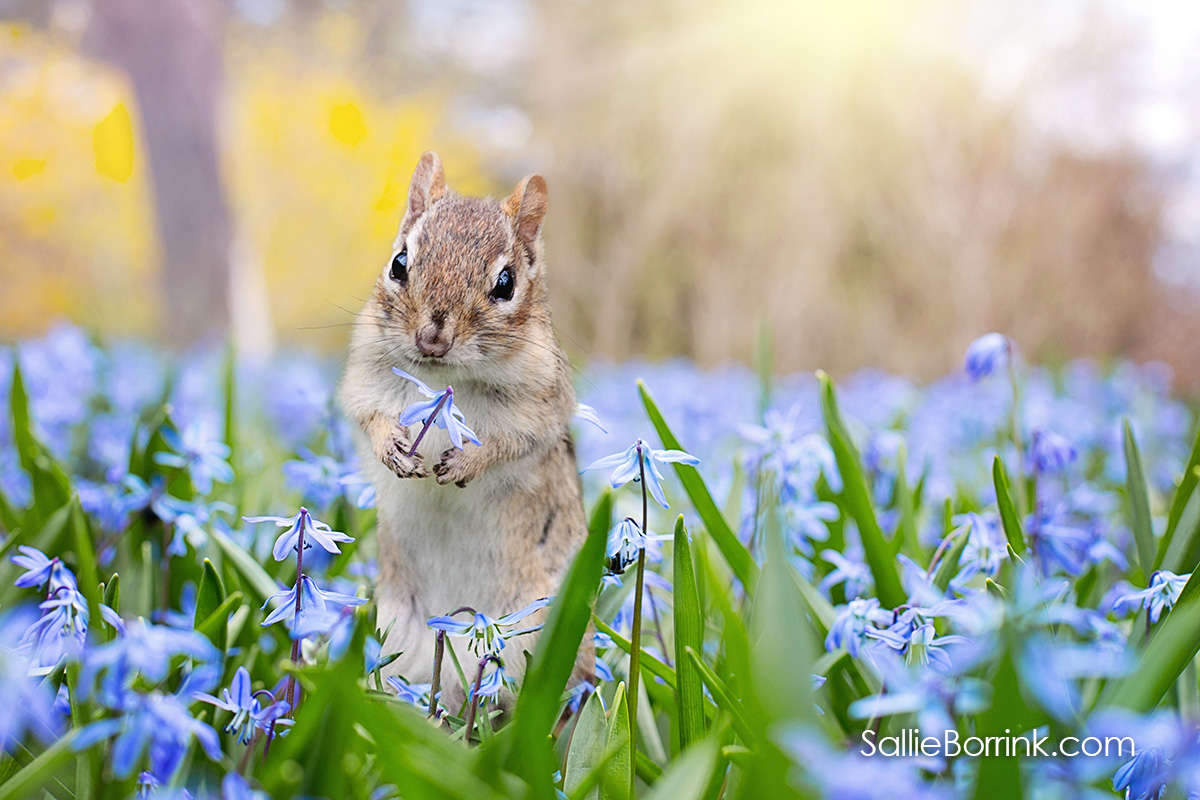 100 Ways to Add Joy to Your Life - Squirrel and flowers