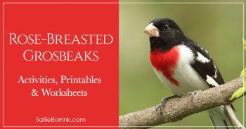 Rose-Breasted Grosbeaks 2