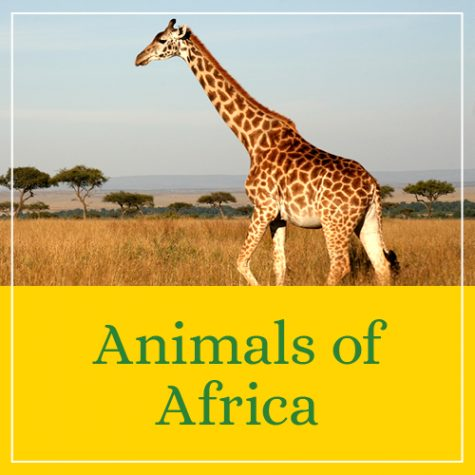 Animals of Africa Theme