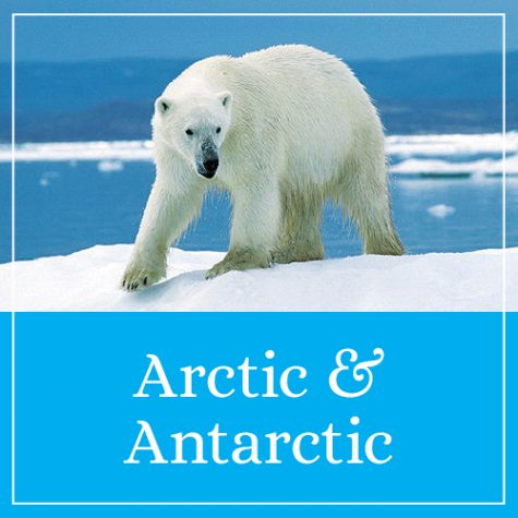 Arctic & Antarctic Theme