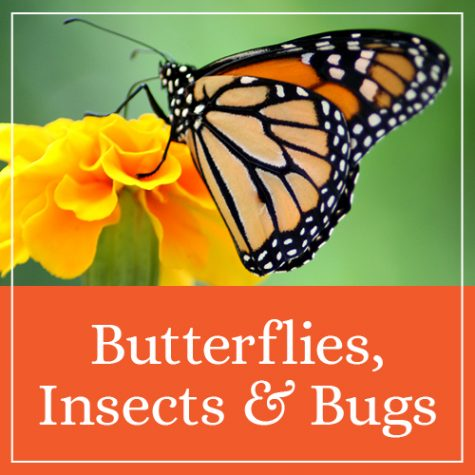 Butterflies, Insects, & Bugs Theme