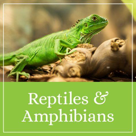 Reptiles & Amphibians Theme