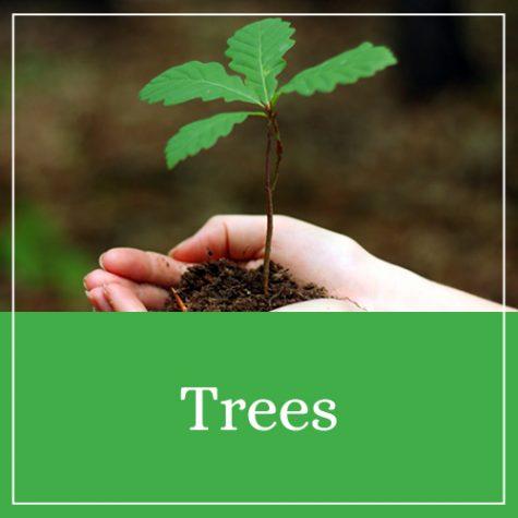 Trees Theme
