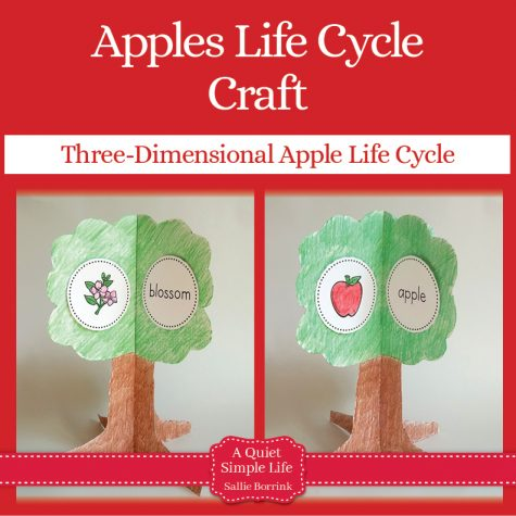 Apples Life Cycle Craft