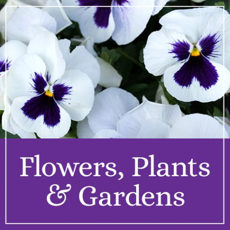 Flowers, Plants & Gardens Theme